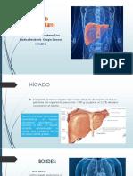 Anatomia Higadoo