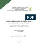 Chile-Resumen-Ejecutivo-Fitorremediacion-Mina-Caracoles (2).pdf