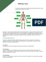 Sistema óseo.docx