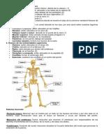huesos del cuerpo humano y su funcion
