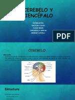 Cerebelo y Diencéfalo.pptx.1