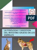 LA FISIOLOGIA Y DIGESTION DEL INSTETINO GRUESO EN ANIMALES