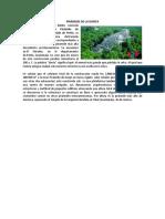 PIRÁMIDE DE LA DANTA.docx