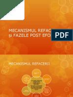 Curs IV - Mecanismul Refacerii Si Fazele Post Efort