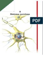 Sistema Nervioso. Uriarte (2009) Cuerpo Humano y Salud