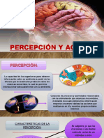 Percepción y Agnosias Final 1