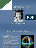 Campos Morfogenéticos.ppt