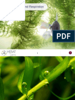 Photosynthesis & Respiration PowerPoint