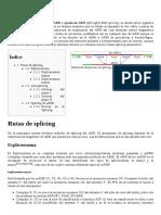 Splicing de ARN