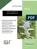 ESTUDIO FITOQUIMICO de LA MALEZA Solanaceae Solanum Elaeagnifolium Cav