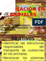 circulacinenanimales-110322204648-phpapp02