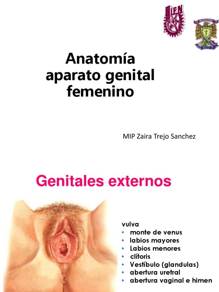 Contemporáneo Vulvar área De Anatomía Componente - Imágenes de ...