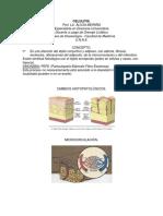 celulitis-2
