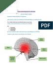 Bases Neurofisiologicas de La Felicidad