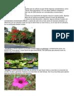 Plantas ornamentales.docx