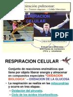 11. CICLO KREBS Y CADENA RESPIRATORIO.ppt