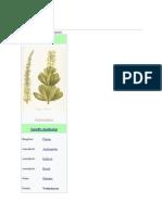 Vochysiaceae