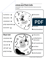 animal-plant-cells-worksheet.pdf