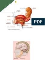 Patología salival
