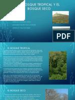 El Bosque Tropical y El bosque seco