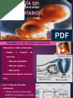 EMBRIOLOGÍA-DEL-SISTEMA-MUSCULAR-Y-TEGUMENTARIO (1).pptx
