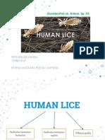 Tatalaksana pada human Lice