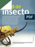 Vida de Insecto