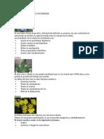 Plantas Medicinales y Su Funcion