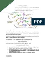 La Estructura Del ADN