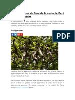 Las 6 Especies de Flora de La Costa de Perú Más Importantes