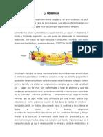 La Membrana.docx