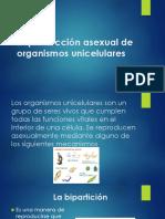 Reproducción asexual de organismos unicelulares.pptx