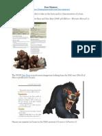 Bear Mimicry