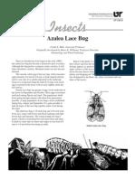 Azalea Lace Bug