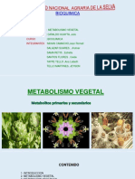 Metabolismo-vegetal-Metabolitos.ppt
