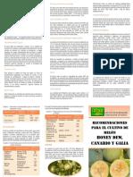 Recomendaciones Para El Cultivo de Meln Honey Dew Canario y Gala