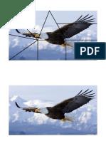 puzle águia.docx