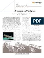 Sod Webworms on Turfgrass