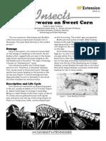 Earworm on Sweet Corn