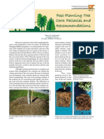 Post Planting Tree Care Fallacies and Recommendations