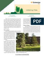 Watering Trees