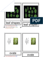 LeafShapes6to9