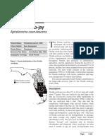 FloridaScrubJay.pdf