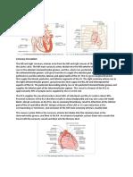 Functional Anatomy