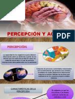PERCEPCIÓN-Y-AGNOSIAS-final 1.pptx
