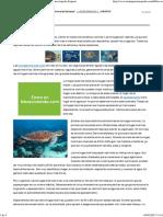 TORTUGAMARINAPEDIA » Tortuga Marina. Enciclopedia Experta
