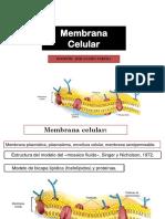 Citología-Membrana
