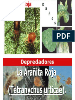 arañita roja.pdf