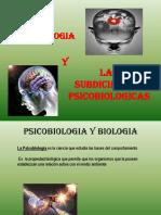Expo de Psicobiologia