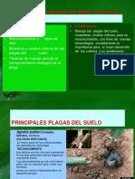 Unidad II Plagas Del Suelo 20112